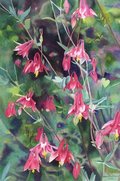 columbine watercolor | wild columbine watercolor matted and framed 20 x 28 $