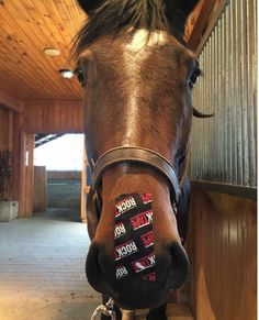 Calm your horse by equine kinesiology tape from Rocktape