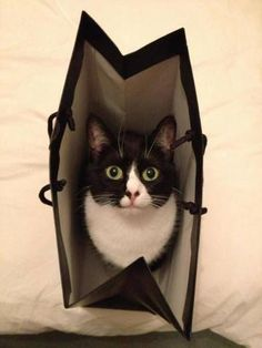 """""""It's easier to let the cat out of the bag than to put it back in again."""" --Mark Twain"""