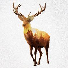 Mensen verstoren de natuur en daarmee de natuurlijke habitat van dit dier.