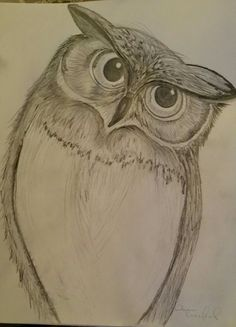 Pencil sketched Owl, by Denise Crawford Oct. 2016