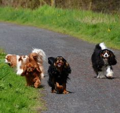 One of each! - - Cavaliers