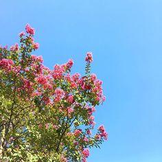 Buon giorno! #goodmorning #buenosdias #buogiorno #lunedì #lunes #monday #cieloazul #cieloazzurro #bluesky #bcn