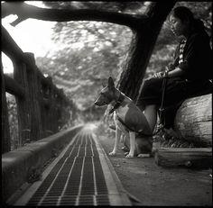 Basenji. By Tommy Oshima. #dog #basenji #animal #