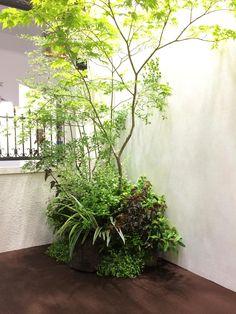Event decoration: A garden by Heartland Interior Garden, Interior Plants, House Plants Decor, Plant Decor, Japanese Plants, Pocket Garden, Vertical Garden Wall, Garden Deco, Side Garden