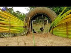 Cara menangkap ular piton pake ban mobil The Originals, World, Garden, Ideas, Garten, Lawn And Garden, Gardens, The World, Gardening