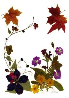 Pressed flowers on Pinterest   Pressed Flower Art, Dried Flowers ...