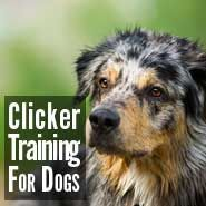 52 Tricks to Teach Your Dog. Would love to teach my next pup to be clicker trained.