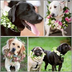 I want my dogs to be at my wedding.