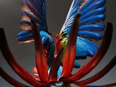 Perroquet-Photography-Series6-640x480.jpg (640×480)