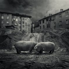 workers, photography by Michal Giedrojc
