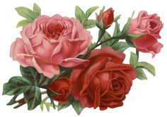 Vintage Roses Scrap ~ LÁMINAS VINTAGE,ANTIGUAS,RETRO Y POR EL ESTILO.... (pág. 599) | Aprender manualidades es facilisimo.com