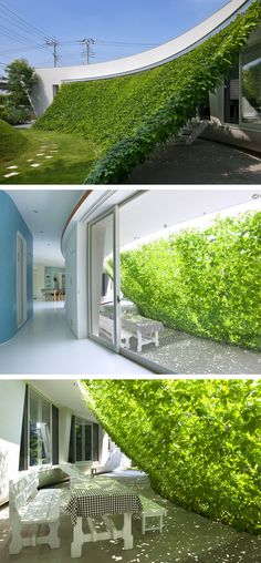 Green screen - solar shading with deciduous plants for summer months prevents over heating