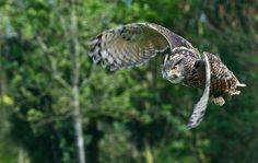 Google Image Result for http://www.wz2k.co.uk/wp-content/uploads/2008/05/bird-of-prey1.jpg