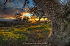 Branch of Light by Bob Bowman on 500px