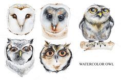 Set of watercolor owls by IvanFet on @creativemarket