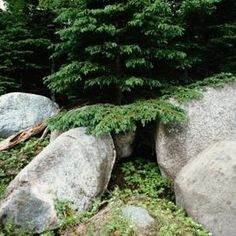 Making your own boulders is any easy project.