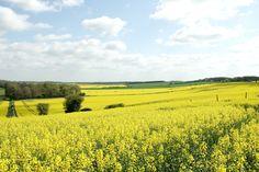 Cotswolds, Oxfordshire