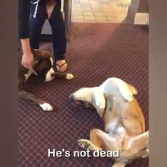 Look at those emotions though Very funny dogs Cute Little Animals, Cute Funny Animals, Funny Cute, Funny Dogs, Funny Animal Clips, Funny Animal Pictures, I Love Dogs, Cute Dogs, Animals And Pets