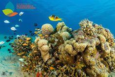 Día Internacional de la Diversidad Biologica