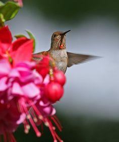 Hummingbird photography tips - Canon Digital Photography Forums
