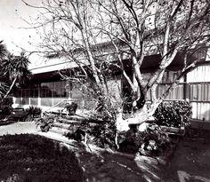 Fachada principal, Casa en Lomas, Paseo de Las Palmas 1210, Lomas de Chapultepec, Miguel Hidalgo, México, DF 1955  Arq. Abraham Zabludovsky -  Front facade of a house in Lomas, Paseo de Las Palmas, Lomas de Chapultepec, Mexico CIty 1955