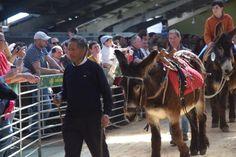 Feria del Burro y romería en San Vitero de Aliste