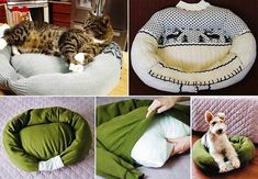 A pillow and sweater make a quick DIY pet bed.