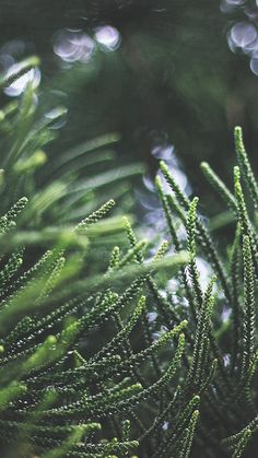 Tree Green Bokeh Nature Spring  #iPhone #6 #plus #wallpaper