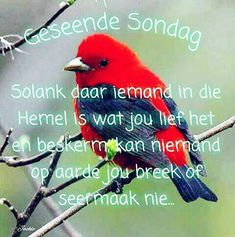 Be thankful in all circumstances, for this is God's will for you who belong to Christ Jesus. 1 Thessalonians 5 16, Afrikaanse Quotes, Goeie More, Morning Blessings, New Living Translation, Strong Quotes, Pray, Thankful, Bible