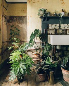 New on our blog: take a tour of plant-filled heaven and fall in love with bare plaster. Link in our profile