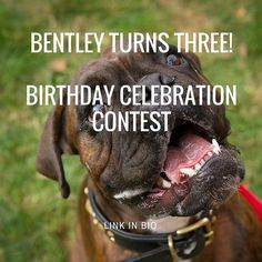 Bentley our Boxer is turning three in a few days! What better way to celebrate than with a contest? First prize $99 Treats Happen chest gift code. Second prize free bag of treats gift code Bonus! Refer five friends get a free bag of treats gift code. . . . Full contest entry and info in the bio! Don't forget to tag a friend who should enter.