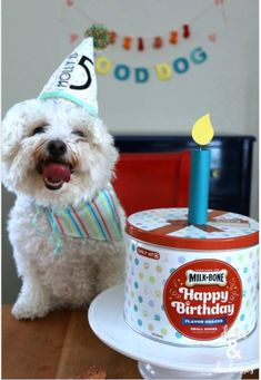 #Ad giving your dog a perfect treat on their birthday shouldn�t be difficult! Checkout this simple party ideas using @milkbone treats @target ?? https://www.pinterest.com/pin/34058540916453362/
