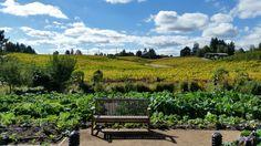 Lynmar Winery | 10:2014