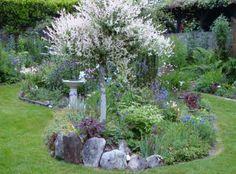 Japonskou vrbu zdobí pestré listy | Galerie | Magazín Zahrada