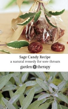 Herbal Remedies Sage Candy Recipe - an ancient remedy for the inflammation of sore throats - Make these sage candies for a natural remedy to sore throat pain that comes from the herb garden. Sage is a natural sore throat remedy. Cold Home Remedies, Natural Health Remedies, Herbal Remedies, Holistic Remedies, Natural Cures, Natural Skin, Konmari, Natural Medicine, Herbal Medicine