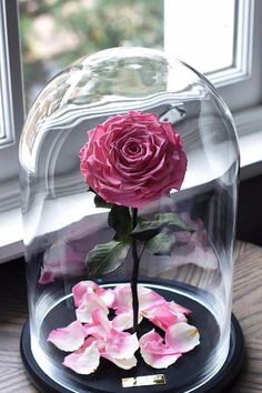 Beauty and the Beast Enchanted Roses From Forever Rose Enchanted Rose, Beauty And The Beast Flower, Beautiful Roses, Beautiful Flowers, Deco Rose, Forever Rose, Luxury Flowers, Deco Floral, Love Rose
