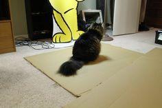 A furry beast, eager to lend a helping paw. Cardboard Cat Scratcher, Diy Cat Toys, Diy Cardboard, Shag Rug, Beast, Simple, Animals, Google Search, Shaggy Rug