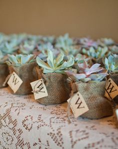 succulent wedding favors get cute rustic votives from http://www.afloral.com/Votive-Candle-Holder-Burlap-Wrapped-12-Per-Pack and succulents too! via http://media.TheKnot.com/ImageStage/Objects/0019/0105935/large_image.jpg