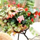25 Beautiful Container Gardens | Midwest Living