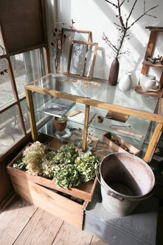 仁平古家具店で購入したショーケースを中心に、アンティークの小物や植物を飾る。