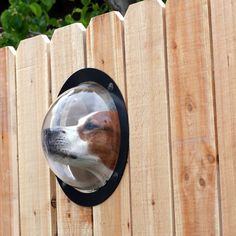Pet Peek - porthole for your pup.  I love this and I would just love walking past a fence with a dog nose peeking out.