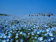 Картинки по запросу картинки япония