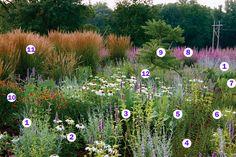 Matrix Planting 1. Perovskia atriplicifolia 2. Echinacea purpurea 'White Swan' 3. Agastache 'Black Adder' 4. Origanum laevigatum 'Herrenhausen' 5. Silphium terebinthinaceum 6. Sesleria autumnalis 7. Amsonia 'Midway to Montana' 8. Lythrum virgatum 'Morden's Gleam' 9. Rhus typhina 'Laciniata' 10. Helenium 'Mardi Gras' 11. Calamagrostis X acutiflora 'Karl Foerster' 12. Nepeta racemosa 'Walker's Low'