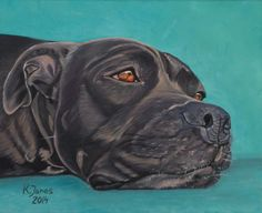 Rocky, the Pitbull - dog portrait painting by Kasiapaintspets.com. Professional animal art under the barter system.