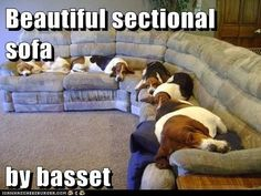 Furniture done right - For my Basset crazy family!