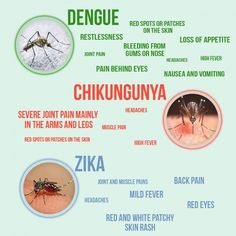 Not sure what's the difference between Zika, Chikungunya or Dengue? Check this graphic and make sure you protect yourself this summer! There are great natural remedies you can use as mosquito repellents.