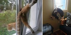 Cats Who Made Poor Decisions,