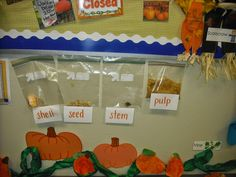 Last week our kindergarten room was filled with fresh picked pumpkin fun! We started the week with a Cara inspired schema chart. Fall Preschool, Kindergarten Science, Preschool Themes, Preschool Activities, Halloween Activities, Autumn Activities, Halloween Crafts, Dramatic Play Centers, Alphabet