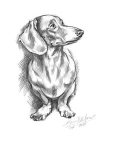 Dog Dachshund portrait. Doxie-4. Instant by DigitalScrapShop